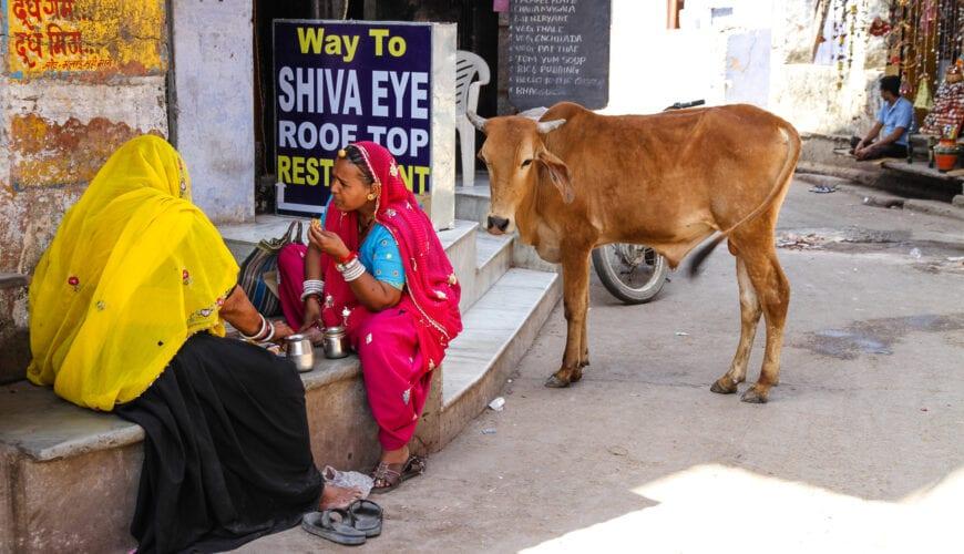 In je eentje naar India: 'Het is wel de bedoeling dat ik levend thuiskom'